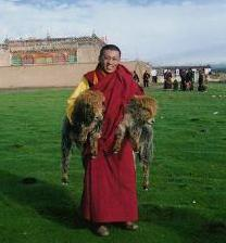 Rinpoche with baby yaks